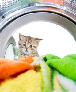 gatto che guarda vestiti lavati con detersivi