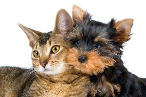 cane e gatto cuccioli