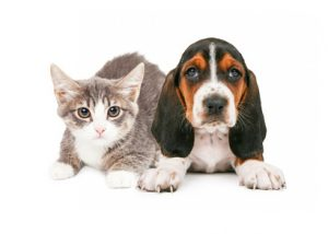 cane gatto cuccioli