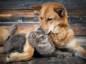 cane e gatto abbraccio
