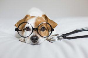 cane con problemi cardiaci