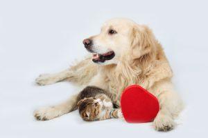 cane e gatto con cuore sano