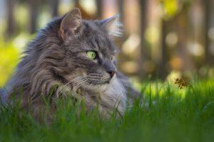 ape vicino al gatto