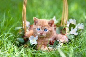 cucciolo di gatto col gelsomino