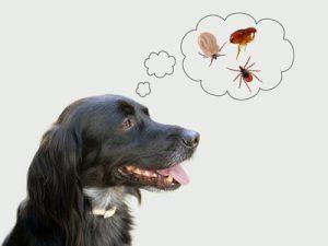 rischio di malattie causate da insetti e parassiti