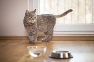 gatto con ciotola di cibo e acqua