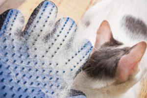 spazzolare il pelo del gatto