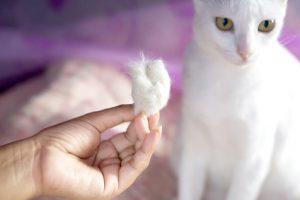 gatto bianco perde pelo