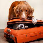 Viaggiare con Cane e Gatto: Come Prepararsi