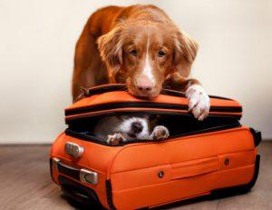 cane dentro valigia per viaggiare