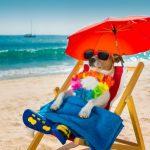 Consigli per la Salute di Cane e Gatto in Estate