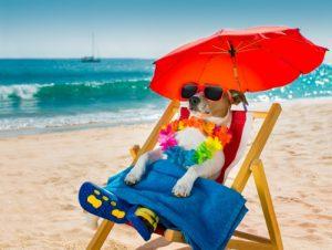 jack russel in spiaggia sotto ombrellone