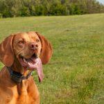 16 Segnali di Disidratazione nel Cane e nel Gatto