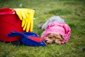 cane vicino alle sostanze chimiche delle pulizie
