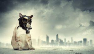 gatto con maschera anti inquinamento