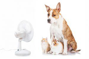 cane gatto e coniglio davanti al ventilatore