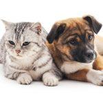 Inappetenza nel Cane e nel Gatto: Cause e Consigli per Ritrovare l'Appetito