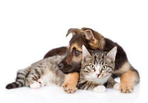 cane e gatto sdraiati insieme