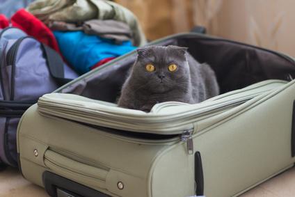 Gatto in una custodia da viaggio