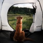 Stress da Rientro delle Vacanze per Cane e Gatto