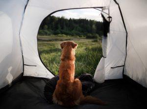 cane dentro una tenda in vacanza nella natura