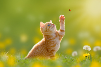 Un gatto che gioca con una farfalla