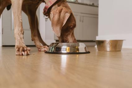 Cane che mangia