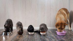 cani e gatti che mangiano