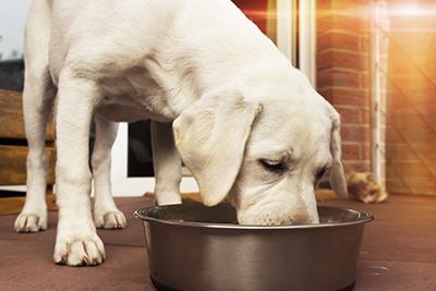Il cane sta mangiando