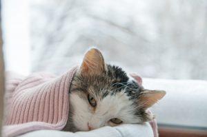 gatto depresso perde peso