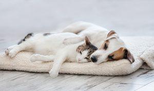 cane e gatto rilassati sul cuscino