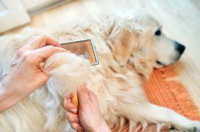 cane che perde troppo pelo