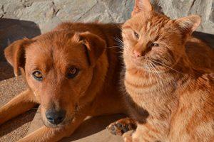 cane e gatto al sole