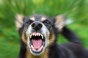 cane stressato e aggressivo