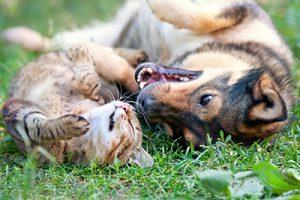 cane e gatto sul prato che giocano
