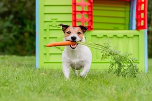 Un cane che tiene una carota nel muso