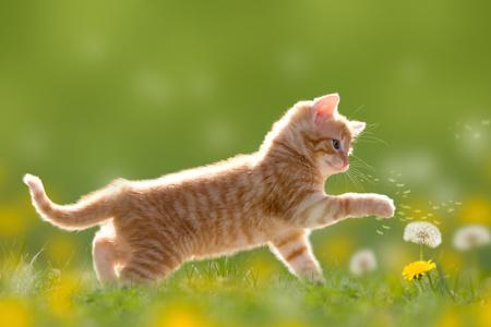 gatto che gioca in prato con un fiore