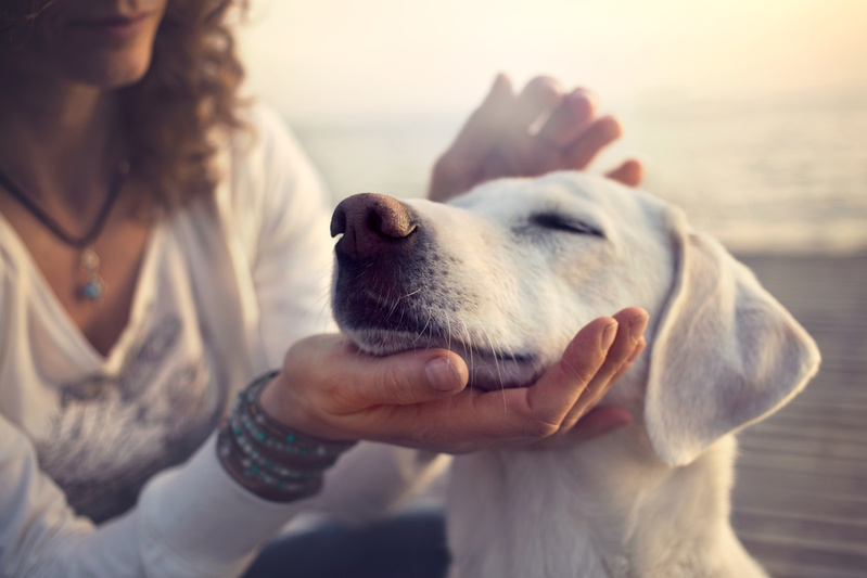cane accarezzato sulla testa