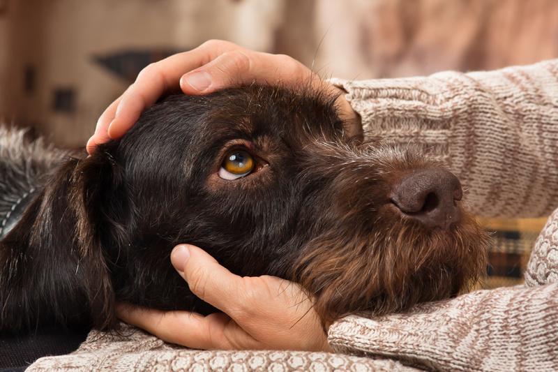 cane che spera di essere guarito dallla malattia