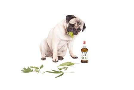 cane che mangia foglie di marijuana
