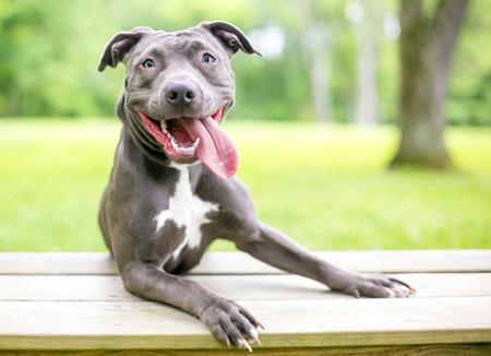 cane ansimante dopo una corsa