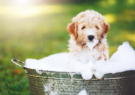 cane che viene lavato in vasca piena di schiuma