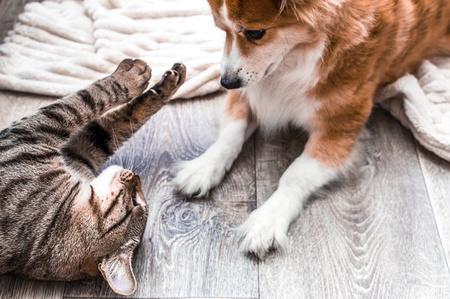 gatto che gioca col cane appena adottato