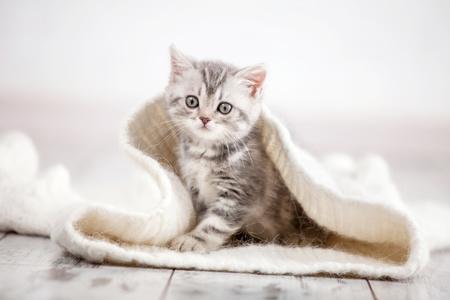 gattino che esce dalla tana