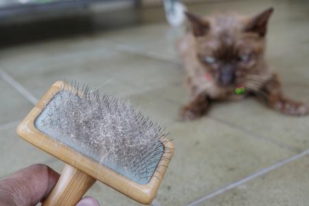 pulci nel pelo del gatto dopo essere stato spazzolato