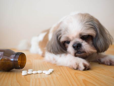 Cane guarda alle pillole