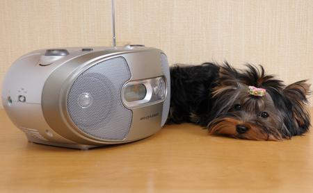 cane che ascolta la radio