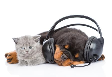 cane addormentato con le cuffie e ascolta la musica