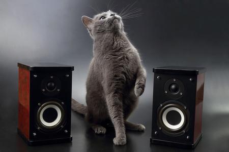 gatto tra due casse di musica