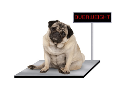 Un cane in sovrappeso